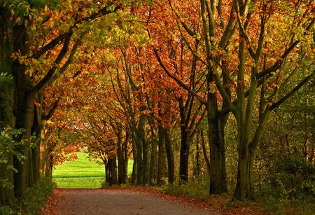 wooded: coloured trees Stock Photo