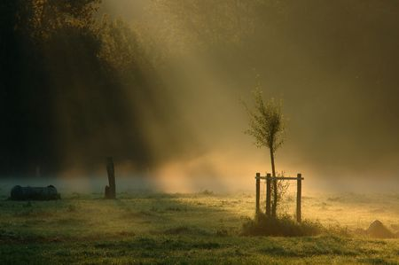 ray of light Imagens