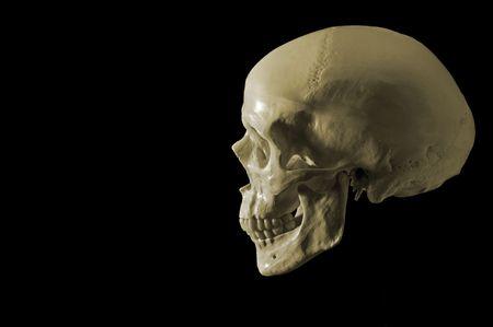 cranium: cranium