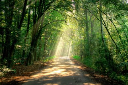 forest path: ray of light Stock Photo