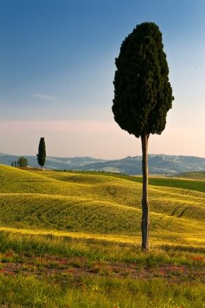 terrapille: Cypress perspective