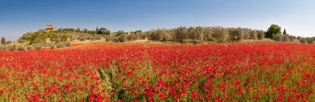 italian landscape: field of red poppies in tuscany region Stock Photo