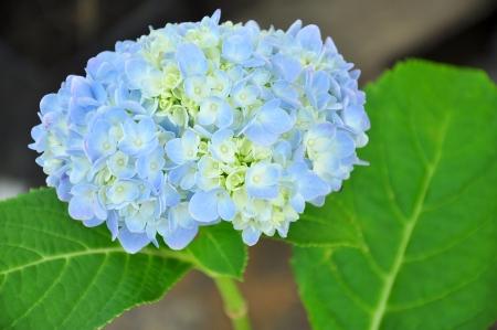 A beautiful flower in the garden