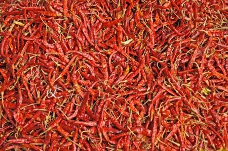 chiles secos: Pimientos rojos picantes Foto de archivo