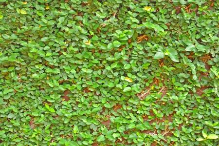 ramble: Leaves ramble