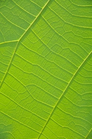 Leaf background photo