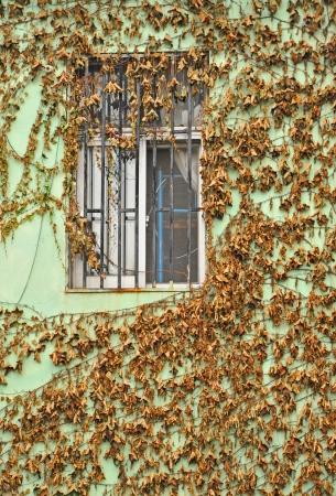 streifzug: Der Baum Wanderung an der Wand