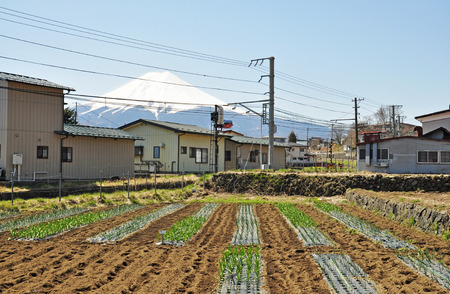 Agriculture in Shimoyoshida of Japan