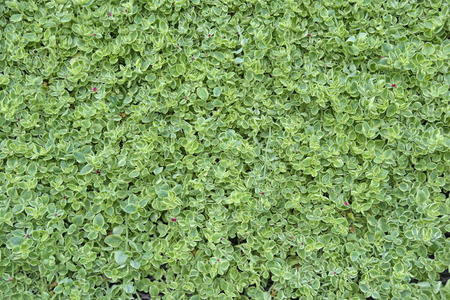 streifzug: Leaves Wanderung an der Wand.