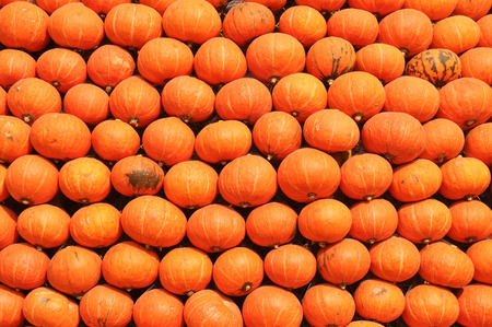 Pumpkin arrangement for background. Stock Photo
