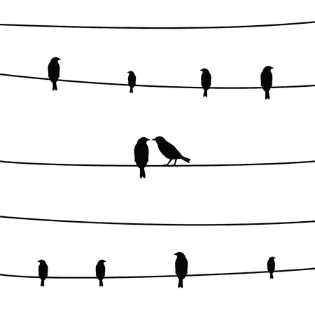backlight: A silhouette of birds on wires.