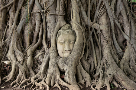 Head of Buddha statue in the tree roots at Wat Mahathat Temple of the great relics, Ayutthaya, Thailand. Stock Photo