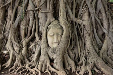 cabeza de buda: Jefe de la estatua de Buda en las raíces del árbol en Sukotai Templo de las grandes reliquias, Ayutthaya, Tailandia. Foto de archivo