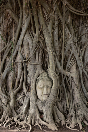 relics: Head of Buddha statue in the tree roots at Wat Mahathat Temple of the great relics, Ayutthaya, Thailand.