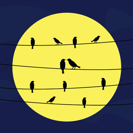 moon light: A silhouette of birds on wires in full moon light.