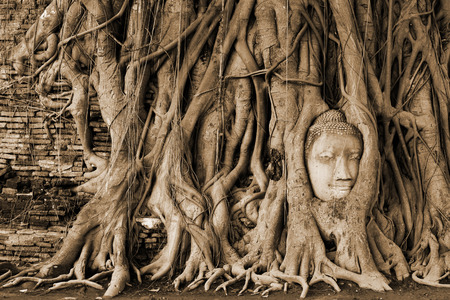 relics: Head of Buddha statue in the tree roots at Wat Mahathat (Temple of the great relics), Ayutthaya, Thailand. Sepia toned.