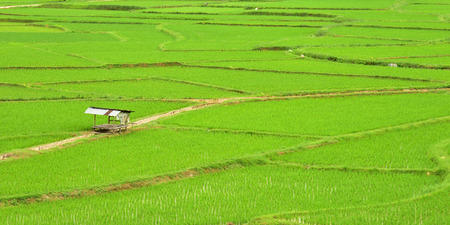 ourdoor: Green rice field in Nan Province, Thailand.