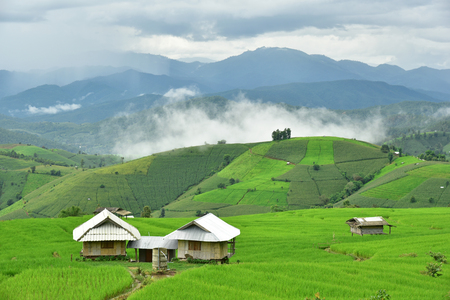 pa: Rice field at Pa Bong Piang village in Mae Cham, Chiangmai, Thailand. Stock Photo