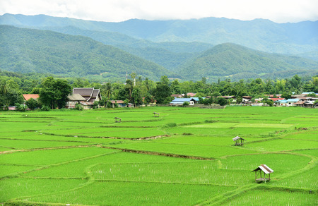 ourdoor: Green rice field. Taken from Phuket temple in Nan Province, Thailand.