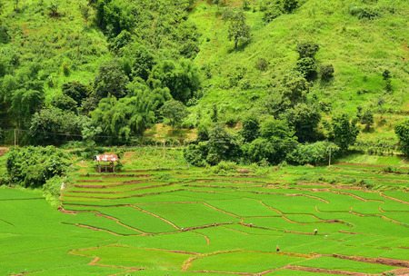 ourdoor: Terraced rice field in Chaloem Phra Kiat district, Nan, Thailand. Stock Photo