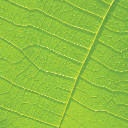 branching: Green leaf texture for background.