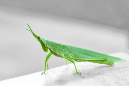 Close up of a grasshopper on the table.