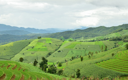 Green terraced rice field at Pa Bong Piang village in Mae Cham, Chiangmai, Thailand. Stock Photo