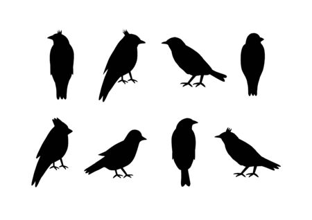 Set of silhouettes of birds on white background.