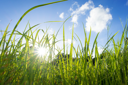 lanscape: Green Grass and Blue Sky
