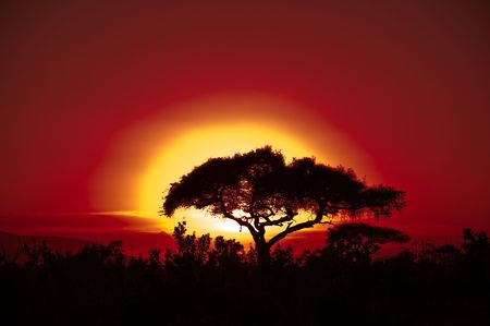 afrika: Sunset with a yellow sun.