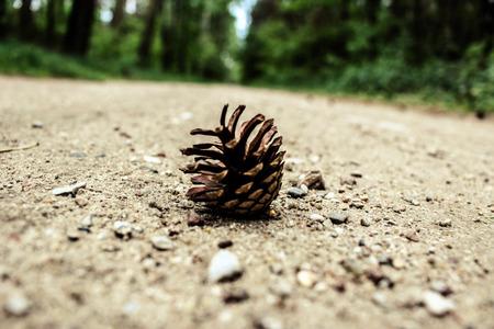 pinecone: pinecone