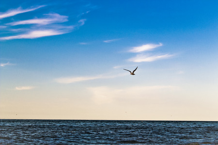 water bird: Seagull Flying Over The Sea Stock Photo