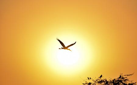cigue�a: Silueta de pintado de la cig�e�a volando contra el sol poniente hermoso color naranja