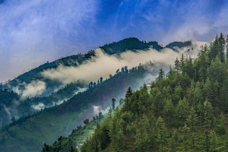 Beautiful scenic deep tropical forest  jungle of Janjehli, Himalayas, India