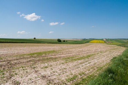 Polish agriculture - landscape near Lublin Stock Photo - 13731951