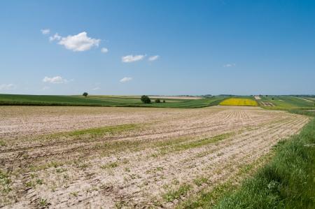 Polish agriculture - landscape near Lublin Stock Photo - 13731951