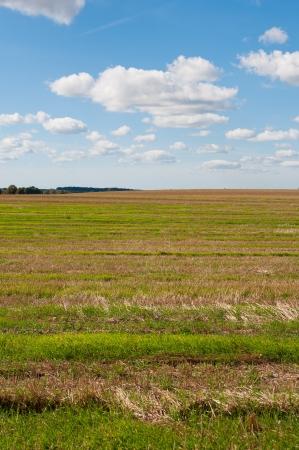 On field Stock Photo - 15606939