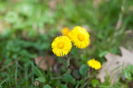yellow spring flowers on nature background Stock Photo - 19202097