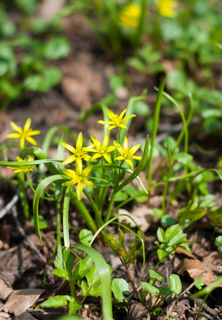yellow spring flowers on nature background Stock Photo - 19202093