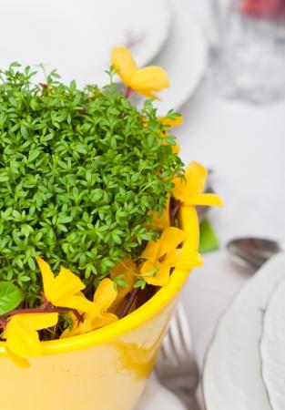 cress in the nice flowerpot Stock Photo