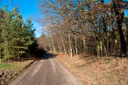 wnc: with ride, Autumn view on Polish forest Stock Photo
