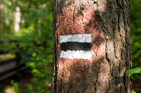 labelling: Sign of slags tourist on the tree in the Kampinos national park - Official labelling scheme of tourist trails in Poland Stock Photo