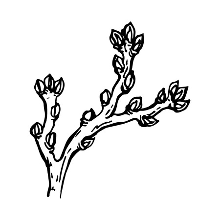 Graphically painted branch of a tree with a kidney isolated on a white background