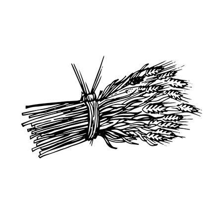 graphically painted sheaf of hay and spikelets isolated on white background Illustration