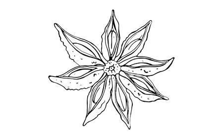 seasoning star anise on white background