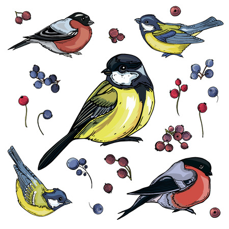 vector isolated set of bright colored little birds