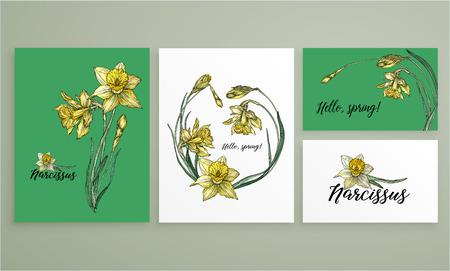 Bright floral spring set with flowers of Narcissus. Ilustração