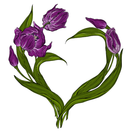 set of vector colored Tulip flowers, spring flowers Illustration