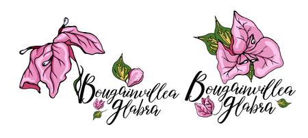 Decorative bougainvillea flowers set, design elements. Can be used for cards, invitations, banners, posters, print design. Floral background in line art style