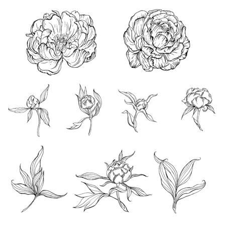 fiori di contorno in bianco e nero e boccioli e foglie di fiori di Magnolia